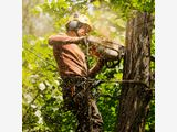 Tree Removal Service in Auckland, NZ