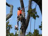 Treesafe Arboriculture Contractors