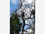 Acorn Trees - Professional Arborist